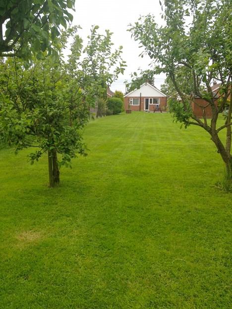 rear garden in summer